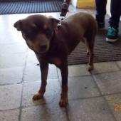 Zdjęcie znalezionego psa