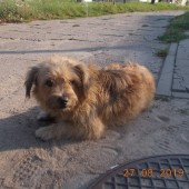 Zdjęcie odłowionego psa