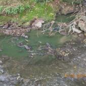 Zielona woda w rzece - fot. Straż Miejska w Zgierzu