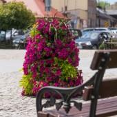 Kwiaty na placu Jana Pawła II w Zgierzu