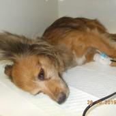 Zdjęcie potrąconego psa