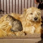 pies i kot przytulają się - fot. www.freeimages.com (domena publiczna)